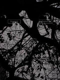 木の写真・画像素材[829056]