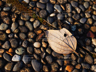 秋の写真・画像素材[829069]