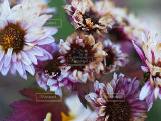 花の写真・画像素材[829082]