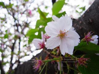 花の写真・画像素材[829083]