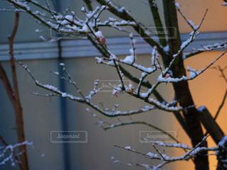 雪 - No.829190