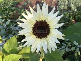 近くの花のアップの写真・画像素材[817845]