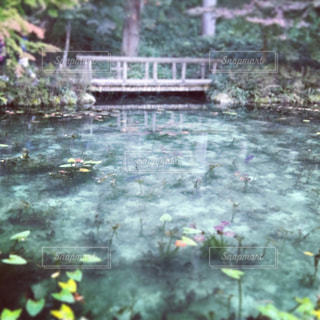 モネの池の写真・画像素材[819766]