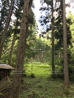 フォレスト内のツリーの写真・画像素材[822609]