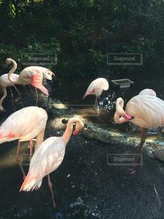 カモメの群れが水の中に立っています。の写真・画像素材[819175]