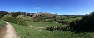 緑豊かな緑の草原で放牧の羊の群れの写真・画像素材[819203]