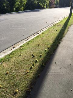 秋の道の写真・画像素材[819474]