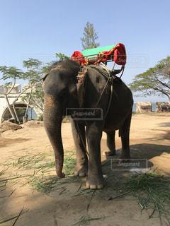象の写真・画像素材[819569]
