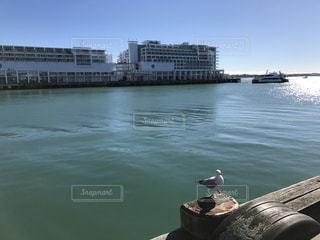 オークランド カモメの写真・画像素材[819600]