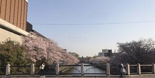 京都 春の桜の写真・画像素材[819601]