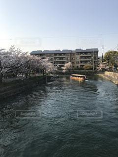 京都 桜の写真・画像素材[819602]