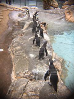 岩に立っているペンギンの写真・画像素材[818100]