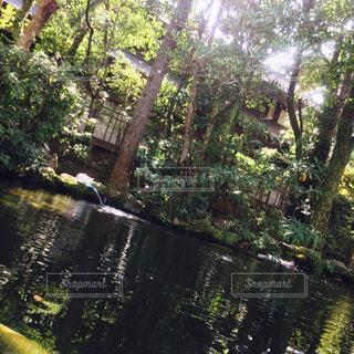 伊勢の池の写真・画像素材[818940]