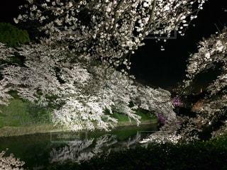 背景の水の庭 - No.818356