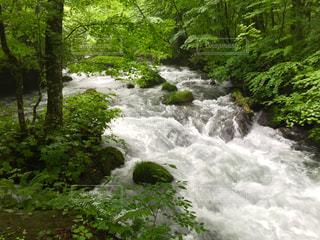 川の側の木と滝の写真・画像素材[818426]