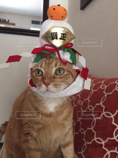 コスプレ猫の写真・画像素材[818590]