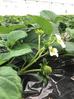 緑の植物 - No.889169
