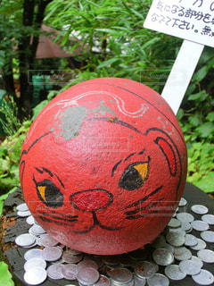福石猫の写真・画像素材[875176]