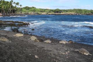 ハワイ島のウミガメの写真・画像素材[876885]
