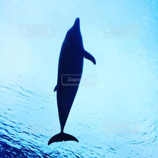 空を泳ぐ - No.818788