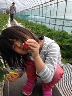 収穫♪の写真・画像素材[819227]