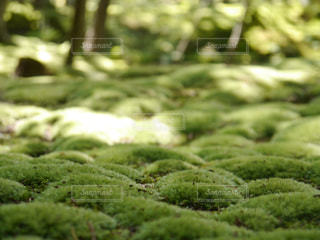 クローズ アップ庭園のの写真・画像素材[819454]