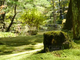 森の中の緑の植物 - No.819455