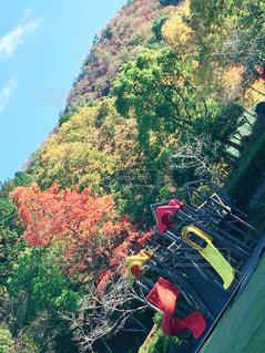 背景の木と大規模なグリーン フィールドの写真・画像素材[876398]