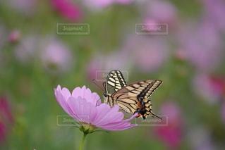 花の写真・画像素材[2637667]