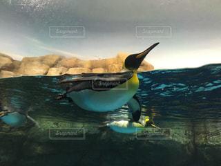 水の中を泳ぐ鳥の写真・画像素材[819445]