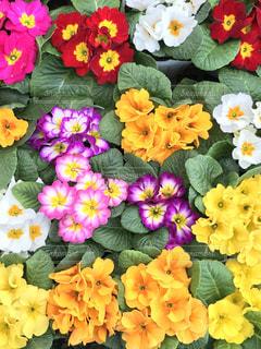 近くの花のアップ - No.873710