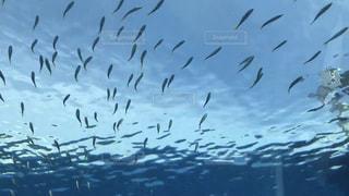 宙を舞うカモメの群れの写真・画像素材[820179]