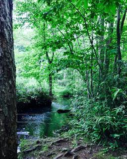 森の中の水辺の写真・画像素材[819863]