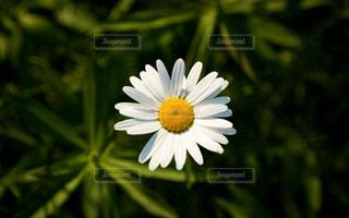 近くの花のアップの写真・画像素材[1183039]