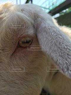 瞳孔の写真・画像素材[820789]