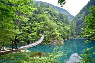 夢の吊り橋の写真・画像素材[821063]
