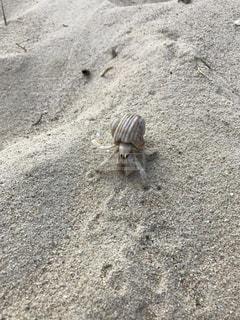 白浜に白いヤドカリさんの写真・画像素材[821087]