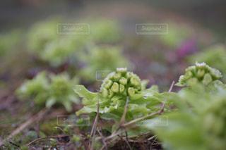 近くの花のアップの写真・画像素材[1084748]