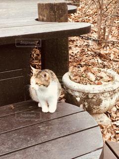 野良猫さんの写真・画像素材[824009]