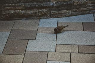 冬の雀の写真・画像素材[822963]