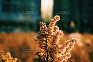 近くの木のアップの写真・画像素材[962706]