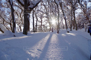 木の隙間の光の写真・画像素材[1007794]