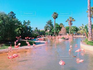 ヤシの木に囲まれたフラミンゴ達の写真・画像素材[821573]