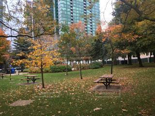 公園のベンチの写真・画像素材[842174]