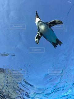 ペンギンと空の写真・画像素材[873661]