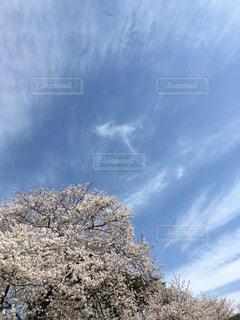 空と桜の写真・画像素材[1966262]