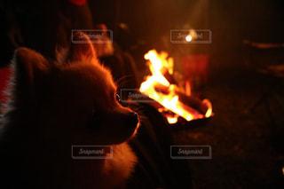 ワンコと焚き火の写真・画像素材[822052]