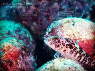 近くの魚のアップの写真・画像素材[821708]