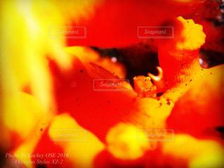 果物のぼやけた写真の写真・画像素材[821714]