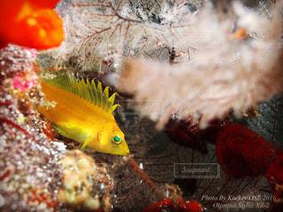 近くに魚のアップの写真・画像素材[821731]